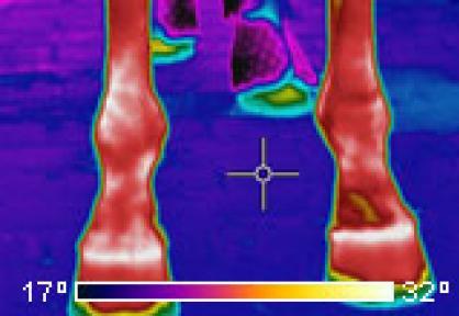 Met thermografie ontstekingen in pezen en gewrichten constateren